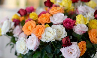 Campanha do Governoestimula envio de flores no Dia das Mães