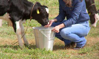 ABCZ e Senar assinam termo para criação do Centro de Pecuária de Precisão em Uberaba