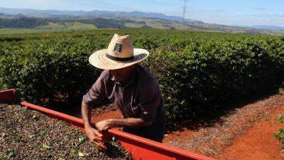 Receita das exportações do agro mineiro sobe 8,1% no primeiro bimestre