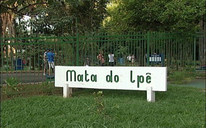 Governo Municipal reabre Mata do Ipê nesta terça, Dia da Árvore; confira a programação